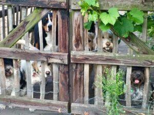 Honden-bij-de-BonAparte_06