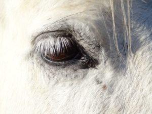 Paarden bij de BonAparte_05