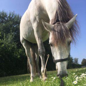 Paarden bij de BonAparte_10
