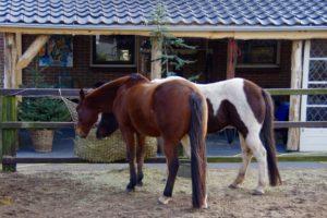 Paarden bij de BonAparte_11