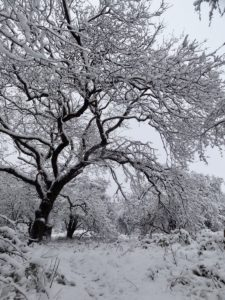 boom met sneeuw